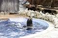 A Sea Lion Show