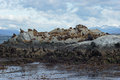 Sea lions colony, Beagle Channel, Argentina Stock Photography