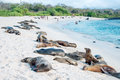 Sea lions galapagos resting under the sun Royalty Free Stock Images