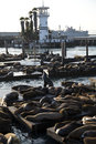 Sea lions at pier san francisco california usa Stock Image