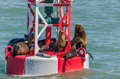Sea lions resting on a red and white buoy Royalty Free Stock Photo