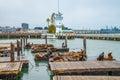 Sea lions San Francisco Royalty Free Stock Photo