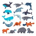 Sea mammal vector water animal character dolphin walrus and whale in sealife or ocean illustration marine set of seal or