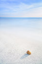 Sea mollusk shell in a white tropical beach under blue sky ocean seascape sandy Royalty Free Stock Photo