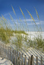 Sea Oats and Dune Fence Royalty Free Stock Images