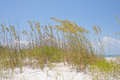 Sea oats golden on a sand dune by the Royalty Free Stock Photography