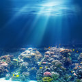 Sea or ocean underwater coral reef snorkeling or diving background Royalty Free Stock Photography