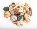 Sea pebbles and seashells on white background