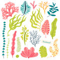 Sea plants and aquatic marine algae. Seaweed set vector illustration isolated on white.