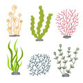 Sea plants and aquatic marine algae. Seaweed set vector illustration