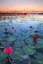 The sea of red lotus, Lake Nong Harn, Udon Thani, Thailand Royalty Free Stock Photo