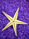 Sea salt and starfish Royalty Free Stock Image