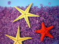 Sea salt and starfishes Royalty Free Stock Images