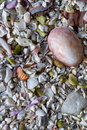 Sea sand with small shells, background
