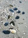 Sea sandy beach, seashells on the shore Royalty Free Stock Photo