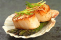 Sea scallop with asparagus in a scallop shell delicious pan seared and pea shoots served on Royalty Free Stock Photography