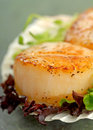 Sea scallop with greens in a scallop shell delicious pan seared lettuce and pea shoots served on Stock Images