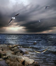 Sea and seagulls Royalty Free Stock Images