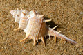 Sea Shell. Stock Photos