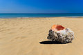 Sea shell in the beach Royalty Free Stock Photo
