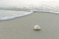 Sea shell at the beach on maldives Stock Image