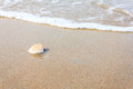 A sea shell on beach with waves Royalty Free Stock Photo