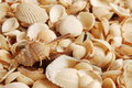 Sea shell, beautiful ocean life of Andaman, Thailand Royalty Free Stock Images