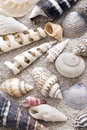 Sea shell collection Royalty Free Stock Photo