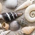 Sea shell collection Royalty Free Stock Image