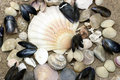 Sea shell collection on the beach Stock Photo