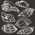 Sea shell collection. Vector set of hand drawn icons  on a black background Royalty Free Stock Photo