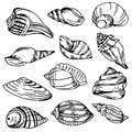 Sea shell collection. Vector set of hand drawn icons isolated on background Royalty Free Stock Photo