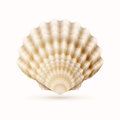 Sea shell detailed vector illustration of Stock Photo