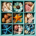 Sea shell display box Royalty Free Stock Photo