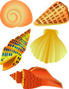 Sea shell illustration Royalty Free Stock Photo