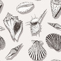 Sea shell pattern 4 Royalty Free Stock Photo
