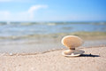 Sea shell with pearl on the sandy beach Stock Images