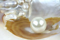 Sea shell with real pearls, macro shot Royalty Free Stock Photo