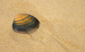 Sea shell in sand a being washed away by water at the beach Royalty Free Stock Photography