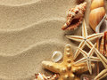 Sea shell on sand shells with as background Royalty Free Stock Photos