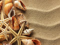 Sea shell on sand shells with as background Royalty Free Stock Image