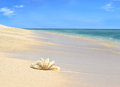 Sea shell on sandy beach with blue sky and ocean in the background Royalty Free Stock Photos