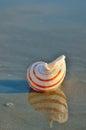Sea shell on the sandy beach Royalty Free Stock Photo