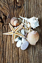 Sea shell, sea stone and starfish collection collection on a wooden table Stock Photo