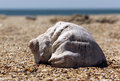 Sea shell ​​shell lying on the sand casts a shadow on the sand midday Royalty Free Stock Photography