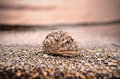 Sea shell on the shore Stock Photography