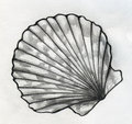 Sea shell sketch Royalty Free Stock Photo
