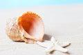 Sea shell and starfish Royalty Free Stock Photo