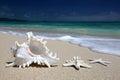 Sea Shell Starfish Sandy Beach Turquoise Ocean Hawaii. Royalty Free Stock Photo