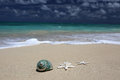 Sea Shell Starfish Sandy Beach Turquoise Ocean. Royalty Free Stock Photo